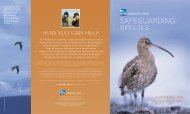 Safeguarding Species - a strategy for species recovery - RSPB