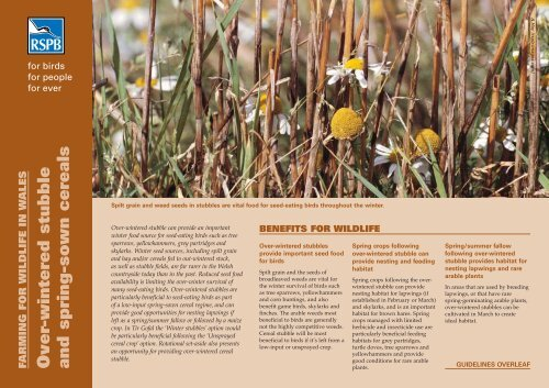 Over-wintered stubble and spring-sown cereals advisory - RSPB