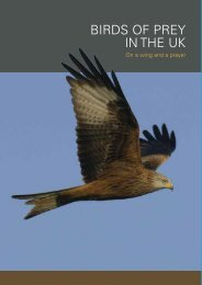 BIRDS OF PREY IN THE UK - RSPB