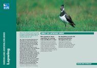 Lapwing advisory sheet - RSPB