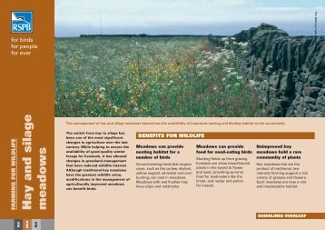 Hay and silage meadows - RSPB