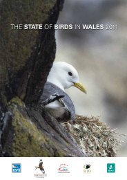 THE STATE OF BIRDS IN WALES 2011 - RSPB