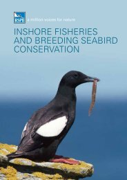 inshore fisheries and breeding seabird conservation - RSPB