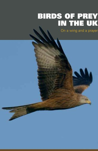 BIRDS OF PREY IN THE UK - Hawk and Owl Trust