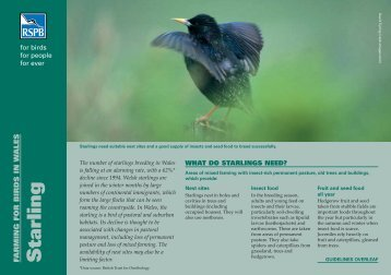 Starling advisory sheet (Wales) - RSPB