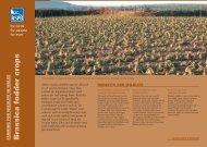 Brassica fodder crops - RSPB