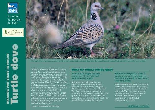 Turtle dove advisory sheet - RSPB