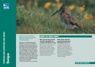 Snipe advisory sheet - RSPB