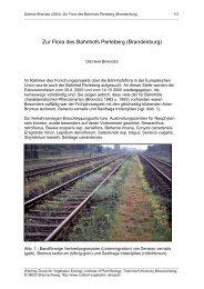 Zur Flora des Bahnhofs Perleberg (Brandenburg)