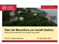 Über die Mauerflora von Amalfi (Italien)