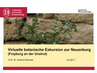 Virtuelle botanische Exkursion zur Neuenburg - Ruderalvegetation