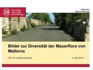 Bilder zur Diversität der Mauerflora von Mallorca - Ruderalvegetation