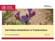 Carrichtero annuae-Amberboion lippii