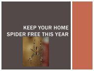Keeping Your Home Spider Free This Year