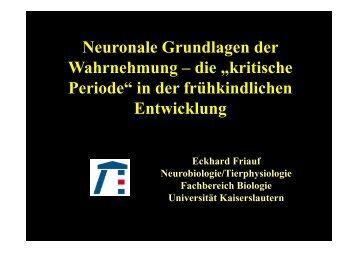 """die """"kritische Periode"""" - Fachbereich Biologie der Universität"""
