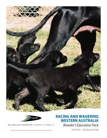 racing and wagering western australia greyhound ... - RWWA Home