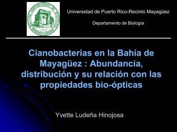 Cianobacterias en la Bahía de Mayagüez y su relación con las ...
