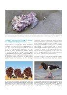 Die Folgen des Klimawandels für das Leben in der Nordsee - Page 4