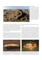 Die Folgen des Klimawandels für das Leben in der Nordsee - Page 6