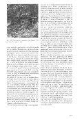 Untitled - Giorgio Samorini Network - Page 4