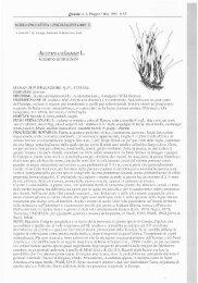 Acorus calamus L.
