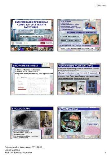 sindrome de smedi parvovirus porcino (ppv) - Sanidad Animal