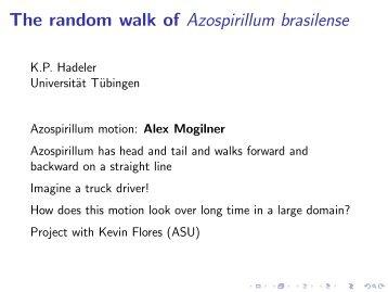 The random walk of Azospirillum brasilense - Cirm