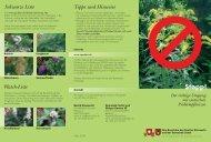 invasive Neophyten - Gemeinde Sattel