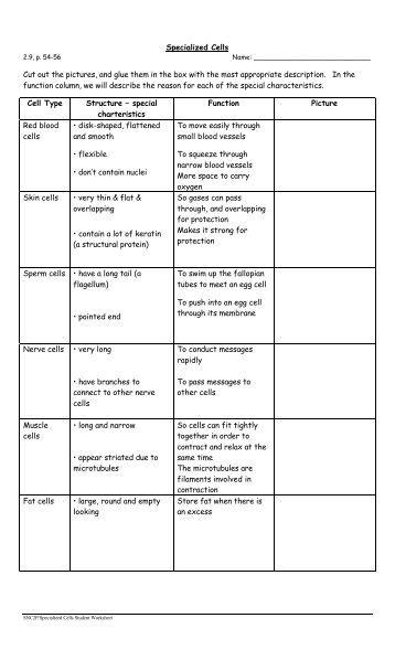 Cell biology worksheets pdf