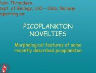 Picoplankton novelties - morphological features of some recently