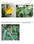 Summary of Plants learned in this lab: - Page 4