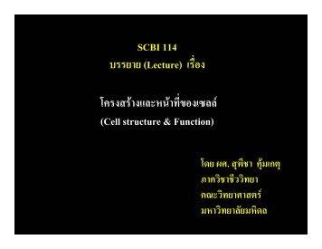SCBI 114 บรรยาย (Lecture) เรื่อง โครงสรางและหนาที่ของเ