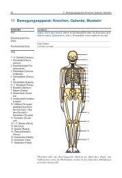 11 Bewegungsapparat: Knochen, Gelenke, Muskeln - Schattauer
