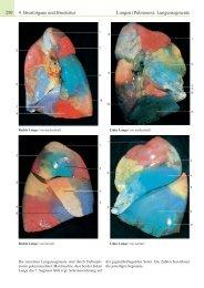 4 Brustorgane und Brustsitus Lungen (Pulmones ... - Schattauer