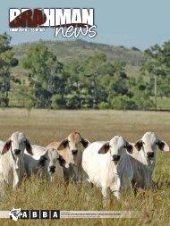 DOWNLOAD PDF 5.2mb - Australian Brahman Breeders Association