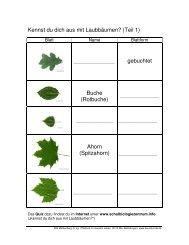 Kennst du dich aus mit Laubbäumen? (Teil 1) gebuchtet Buche ...