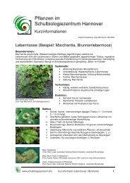 AH Marchantia Lebermoose Pflanzen im Schulbiologiezentrum