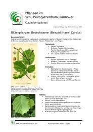 Bedecktsamer/Laubbäume (Corylus, Hasel)