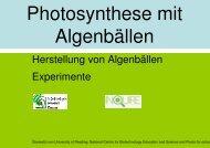 Photosynthese mit Algenbällchen (Scenedesmus), Präsentation