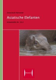 Zooschule Hannover Asiatische Elefanten