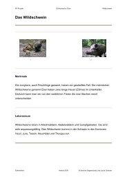 Das Wildschwein - Schule Schmerikon