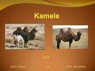 Kamele - Schule Nottwil