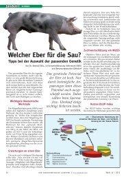 Welcher Eber für die Sau? - Schweinebesamung Gleisdorf