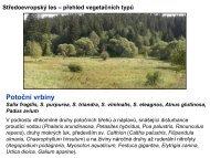 Středoevropský les – přehled vegetačních typů Potoční vrbiny ...