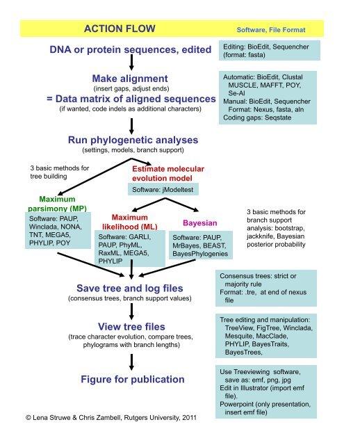 Phylogenetic Analysis Flow Chart Pdf