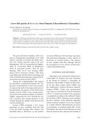 A new fish species of Roeboides from Panamá (Characiformes ...