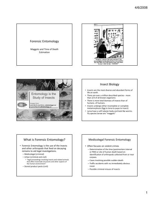 Forensic Entomology Insect Biology What Is Forensic Entomology