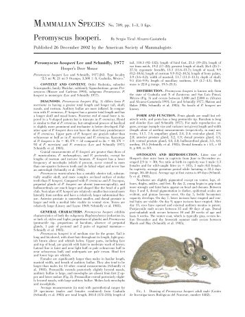 Peromyscus hooperi