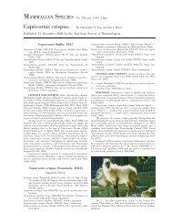 Capricornis crispus - Clark Science Center