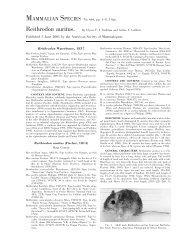 Reithrodon auritus - Clark Science Center